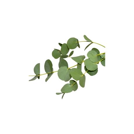 Küünla aroomiõli 500ml Eucalypt