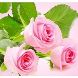 Küünla aroomiõli 10ml Fresh Cut Rose