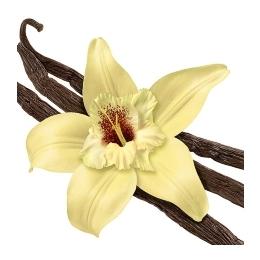 Küünla aroomiõli 10ml French Vanilla IPRA