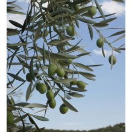 Küünla aroomiõli 10ml Oliiv IPRA*