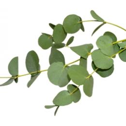 Küünla aroomiõli 30ml Eucalypt